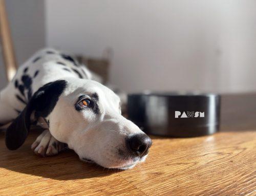 ZGODBE KATAPULTA: Pawsm – za daljše in srečnejše življenje vašega psa